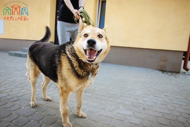 Как будет выглядеть будущий центр бездомных собак